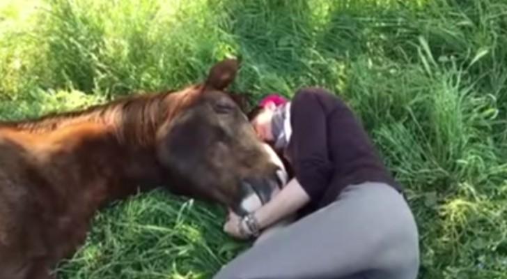 Ils s'allongent pour se reposer sur l'herbe... L'affection de son cheval est ADORABLE