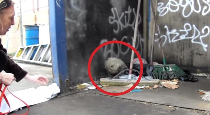 Ils trouvent un chien aveugle dans les poubelles, mais ce qu'ils réussissent à faire est miraculeux