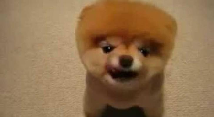 Cachorro para llenar de mimos