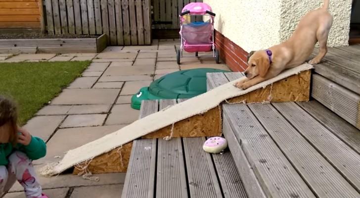 Este cachorro no quiere descender por la escalera. La solucion la encuentre es MUY GRACIOSA!