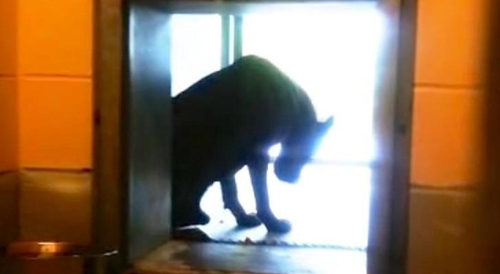 Tous les jours ce chien est seul dans une station de lavage, mais quelqu'un va le sauver!