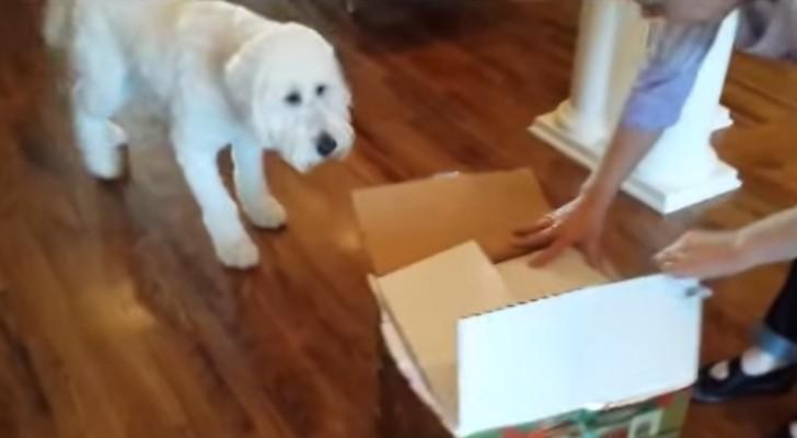 Fa una sorpresa al suo cane per il compleanno. Che c'è nella scatola?