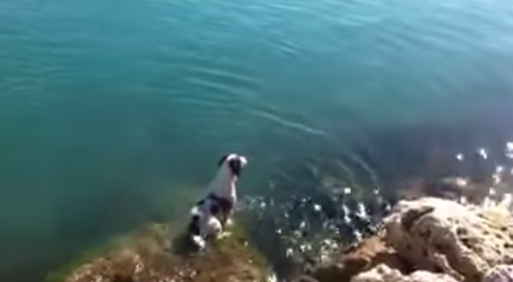 A dog is waiting for his friends on a rock, look how he greets them ... Wow!