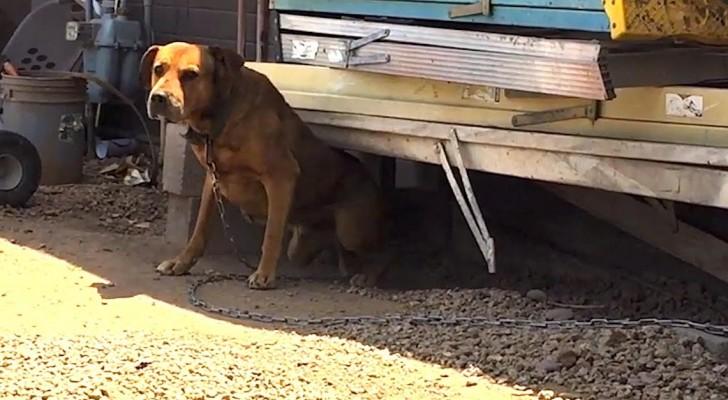 Por 3 años ve un perro atado a las cadenas...miren como logra llevarselo!