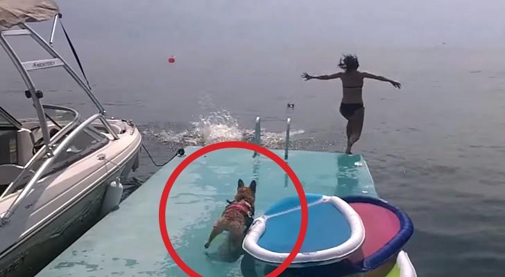 Während er Schwimmunterricht nimmt, bringt euch dieser Hund zum Lachen