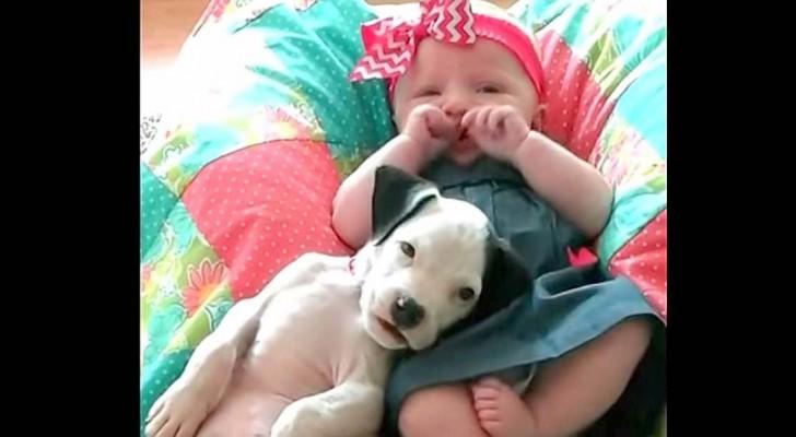 1 år tillsammans: de här bilderna av en liten flicka och sin hund kommer att få er att drömma