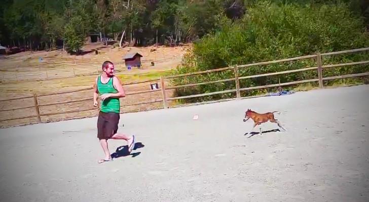 Deze pony is 3 dagen oud: kijk wat er gebeurt als zijn vriend begint te rennen...