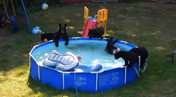 Guardano fuori dalla finestra e non credono ai loro occhi: ecco cosa sta succedendo in piscina!