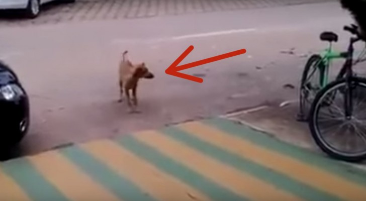 You can't imagine what this dog does as soon as the music starts ... Wooooow