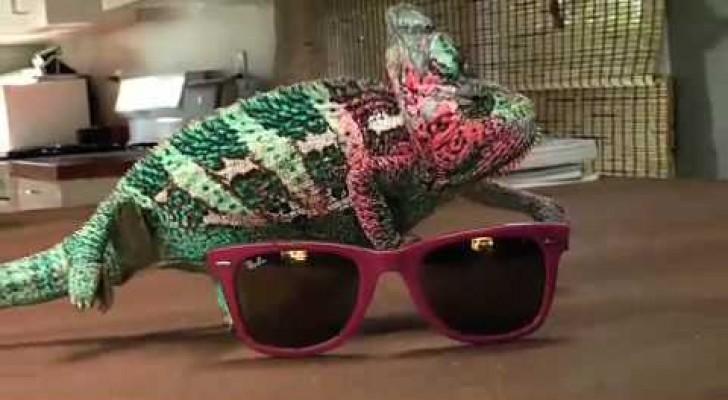 Il super camaleonte