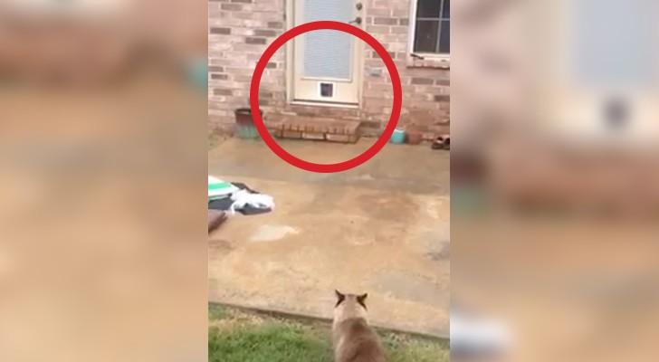 Ein Mann installiert eine Katzentür, aber irgendetwas läuft nicht so wie geplant