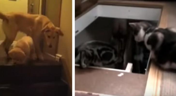 La Differenza Tra Cane E Gatto è Riassunta In Questo Video Da