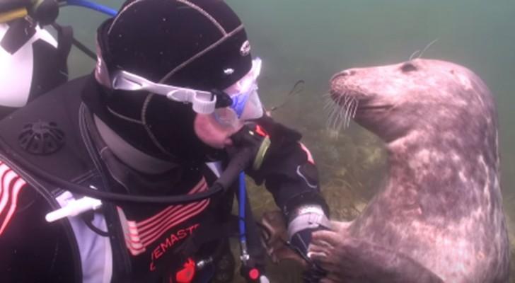 La foca si avvicina al sub per chiedere qualcosa... Quando capirete cosa, non ci crederete!