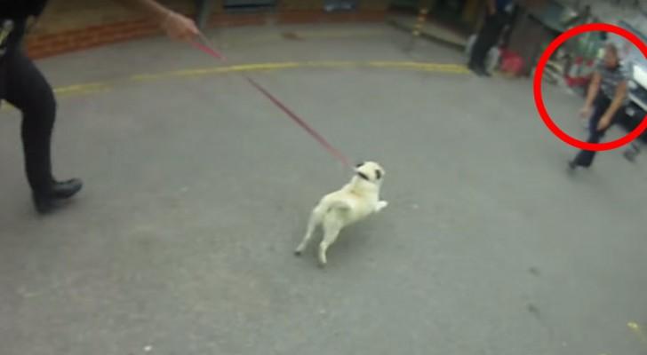 Hier zie je het magische moment waarop een ONTVOERDE hond wordt herenigd met zijn mama