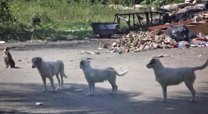Esta praia é famosa por um motivo horrível, mas estes cães terão mais sorte!