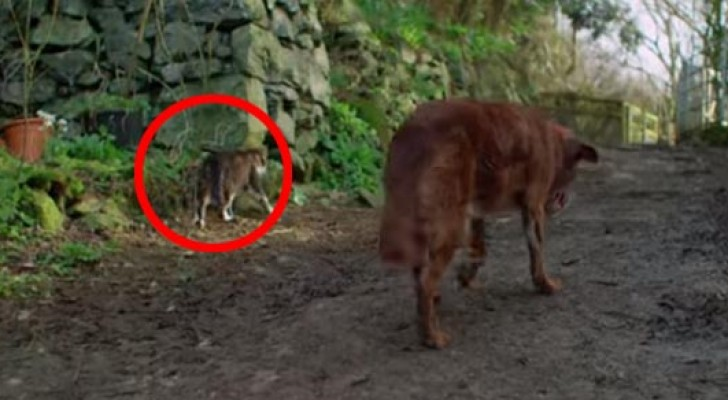 This old dog is totally blind, but look what the cat on the left does...