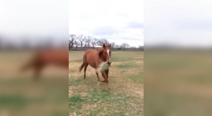 Un cheval court avec la bouche plein de foin: ce qu'il va faire va vous réchauffer le cœur