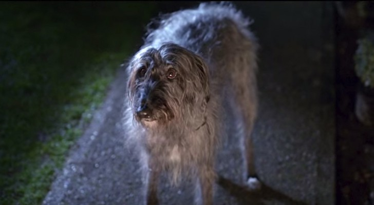 An abused dog runs away from home, but what happens next will change his life