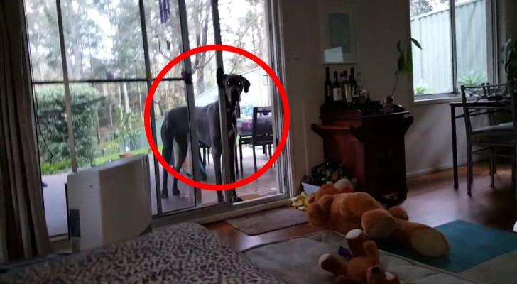 Il dit à son chien que c'est le moment du bain : jamais je n'aurais imaginé une telle réaction!