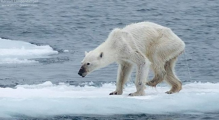 Qual è il prezzo dei cambiamenti climatici? Questa foto ve lo dimostra fin troppo chiaramente