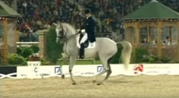 En jättefin häst kommer in på terrängen: när musiken börjar blir publiken häpnad