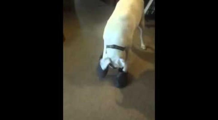 Was dieser Hund mit den Crocs macht, wird euch die besten 20 Sekunden des Tages schenken