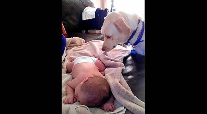 Dit is wat de hond doet als mama thuiskomt met een slapende baby... Wow!