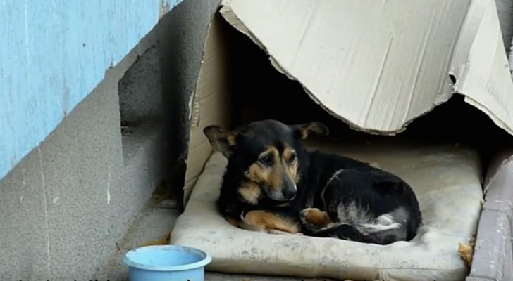 Er lebte in einer Schachtel und wird von allen ignoriert, aber schaut ihn an, wenn sich jemand nähert