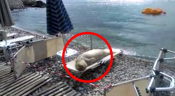 When you'll see who's sunbathing on this deserted beach, you will not believe your eyes!