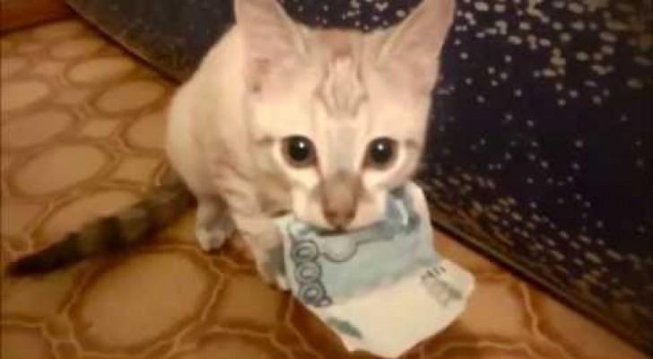 Gatto ladro