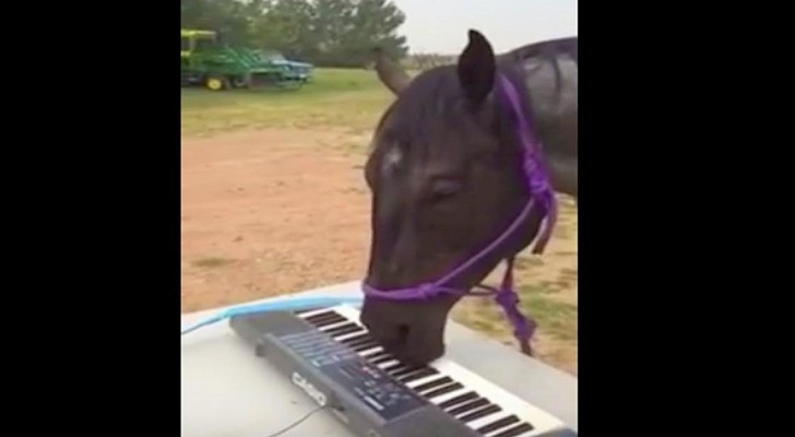 Sie gibt ihrem Pferd ein Keyboard.. Was dann passiert, ist verblüffend!