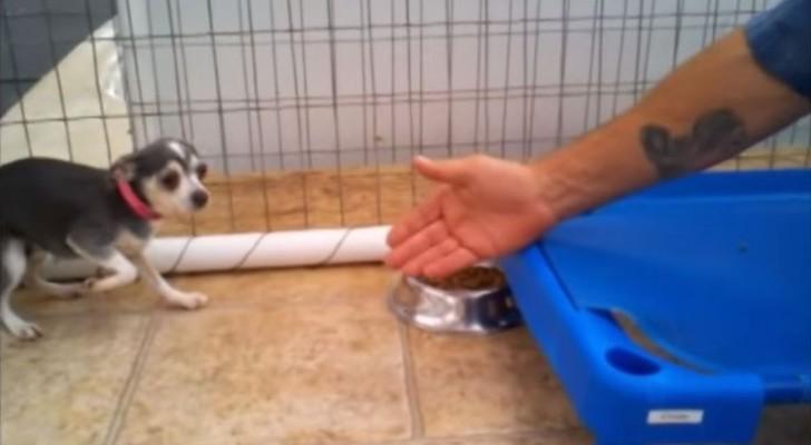 Ce chien a toujours vécu enfermé dans une cage, mais un homme le caresse pour la première fois