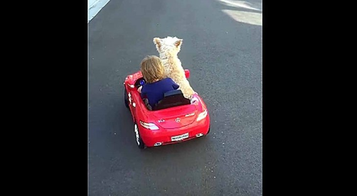 This boy would like to drive the car, but keep an eye on his dog ...