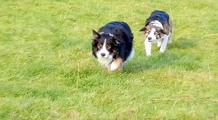 Ils voient leurs chiens se déplacer bizarrement... ne ratez pas ce qu'il se passe à la fin!