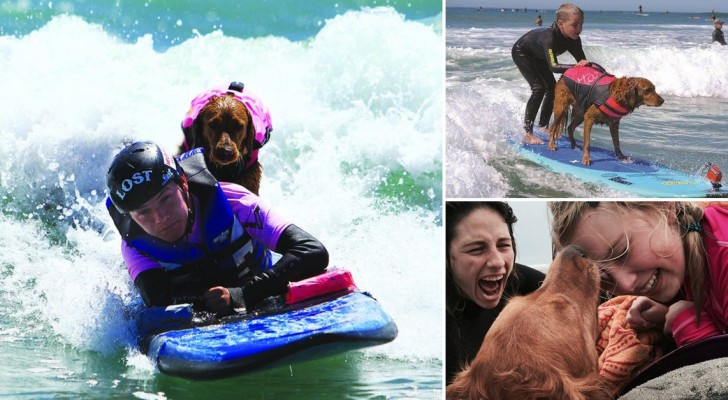 L'Incredibile storia di Ricochet, il cane che fa surf con i ragazzi disabili