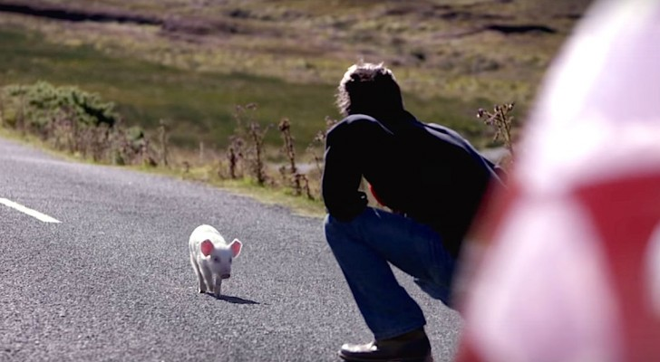 A postman noticed a small animal on the road ... here's what happens when he brings it back home