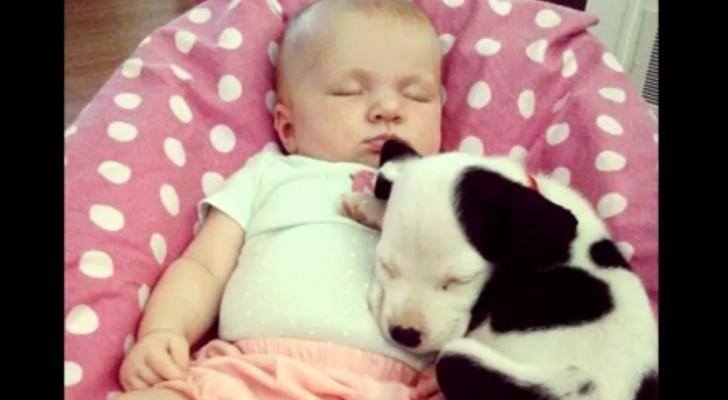 Uma criança e um cachorro crescem juntos: o primeiro ano de vida da duplinha é emocionante!