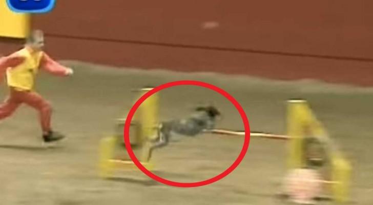 In deze video zie je een van 's werelds snelste honden!