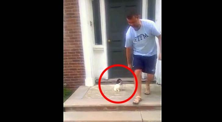 Ce chiot a peur des marches : sa manière de résoudre le problème est hilarante!