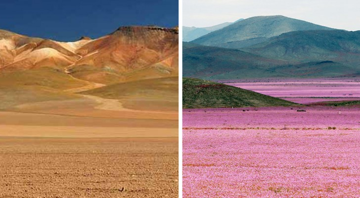 Dit is de droogste plek op aarde, maar om de 7 jaar vindt er een indrukwekkend natuurverschijnsel plaats