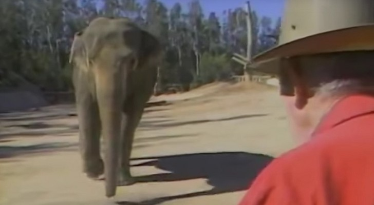 A trainer meets his elephant 15 years after ... the reaction is amazing!