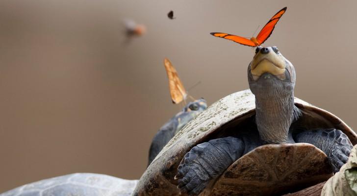 Sapete come bevono le farfalle? Scopritelo grazie a questa splendida immagine