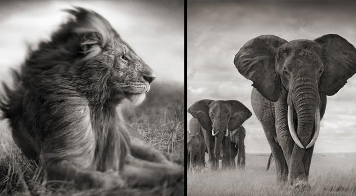 Gli animali africani come non li avete mai visti: ecco il loro lato più intimo e maestoso