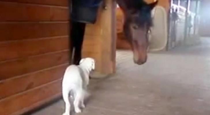 Au début le petit chien a peur, mais la magie entre eux va vite opérer