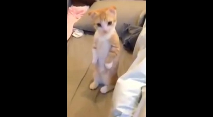 While he cleans her bed, the behavior of this cute kitten is adorable !