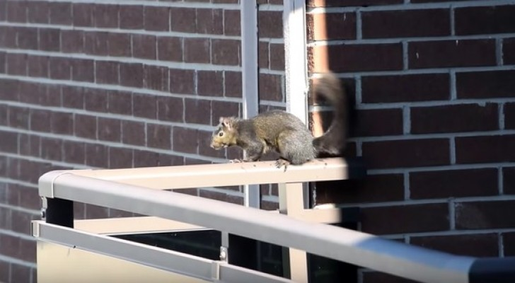 They're filming a squirrel on a balcony at the 21st floor: what he does shortly after will make them SCREAM!