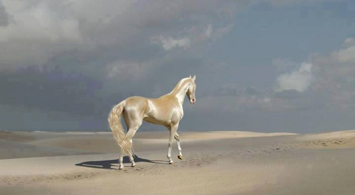 Les caractéristiques de l'Akhal-Teke, considéré par beaucoup comme l'un des plus beaux chevaux au monde