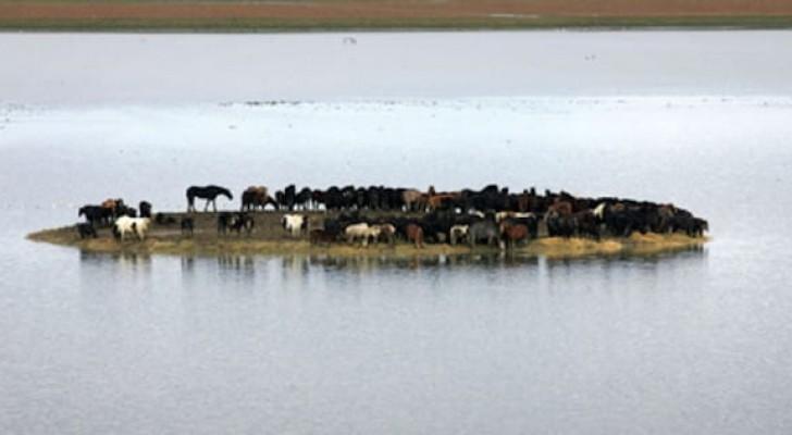 100 cavalli restano intrappolati su un'isola per 3 giorni, ma 6 donne sono decise a salvarli