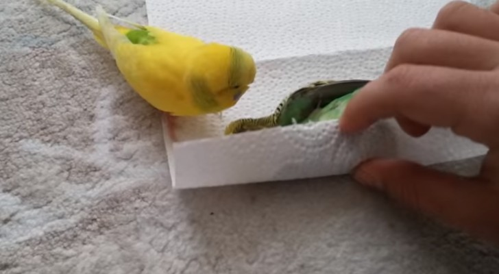 Un papagallo no pudo resistir mas, pero la reaccion de su amigo es inimaginable