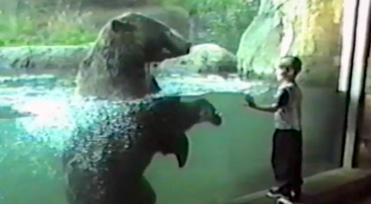 Een jongen nadert een beer, zowel hij als zijn ouders zagen de reactie van de beer niet aankomen
